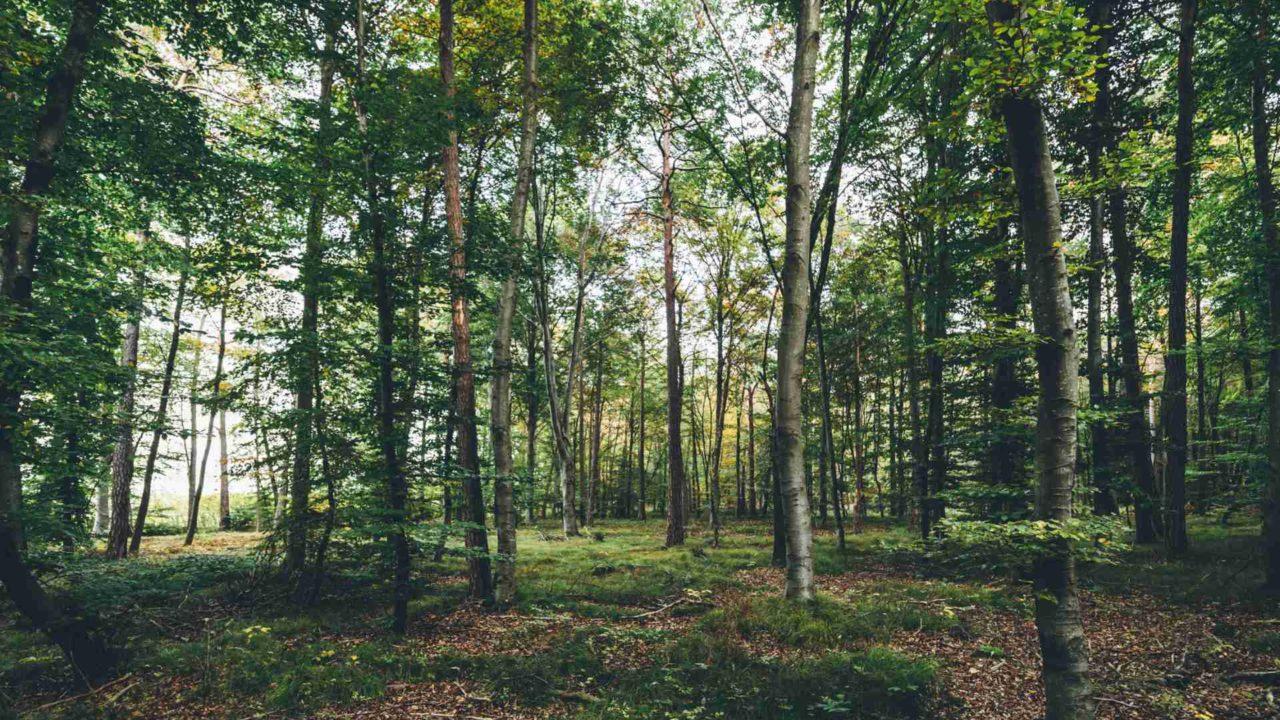 Wälder für Generationen